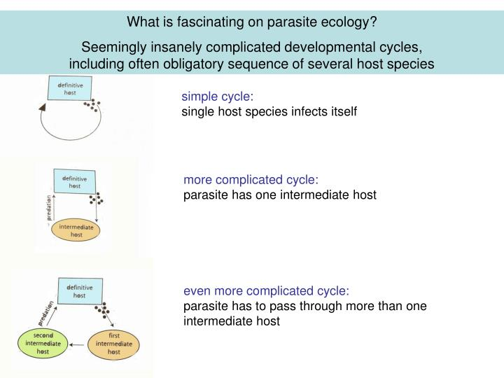 What is fascinating on parasite ecology
