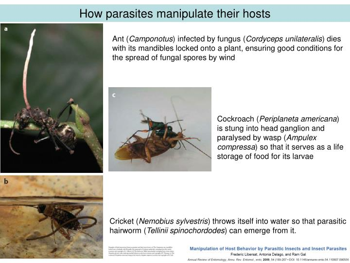 How parasites manipulate their hosts