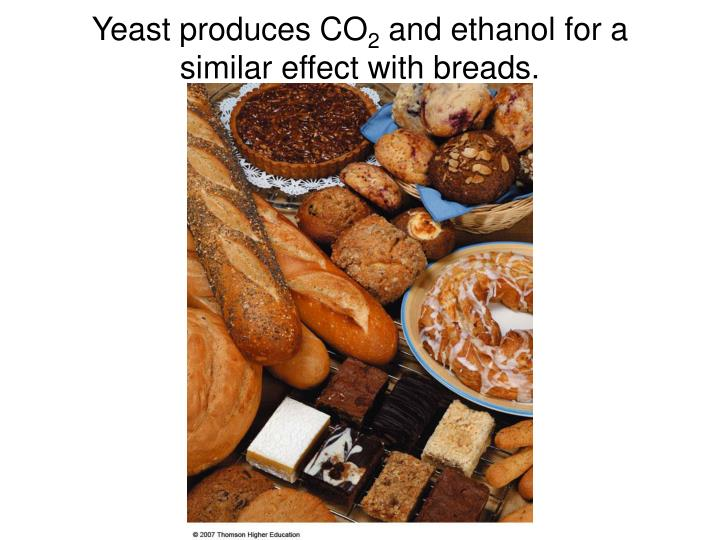 Yeast produces CO