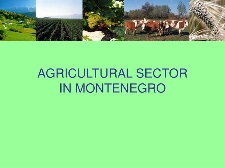 agricultural sector in montenegro n.