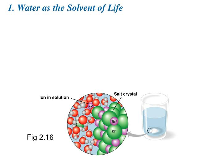 1. Water as the Solvent of Life