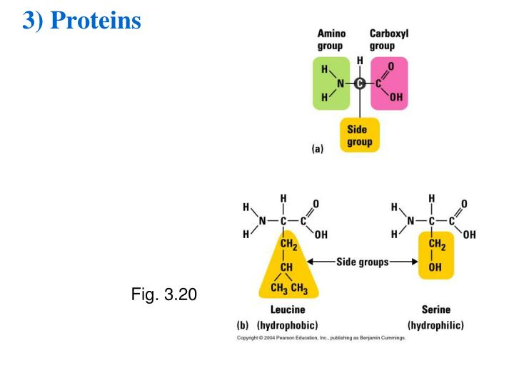 3) Proteins
