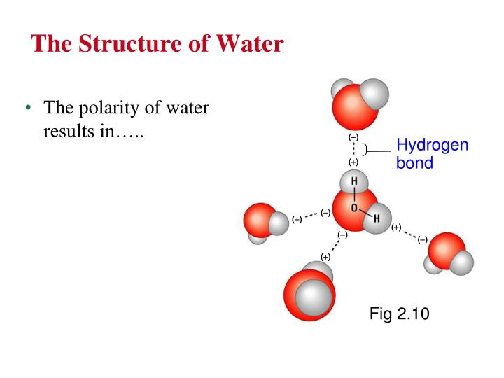 The Structure of Water