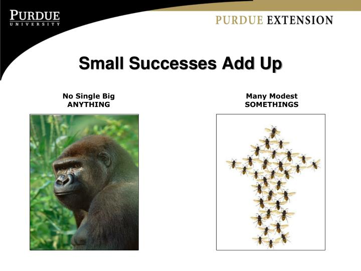 Small Successes Add Up