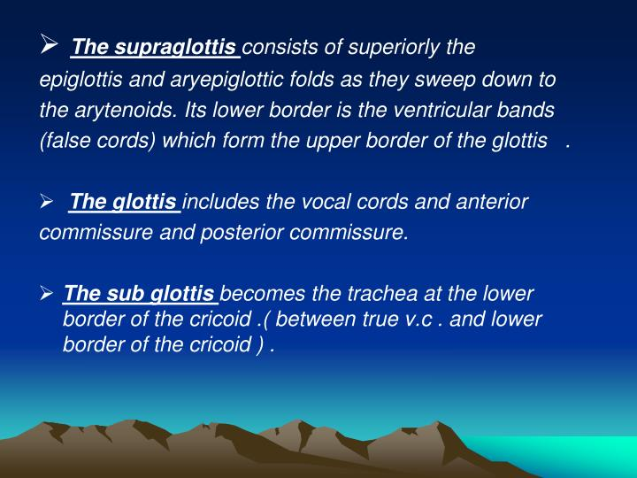 The supraglottis