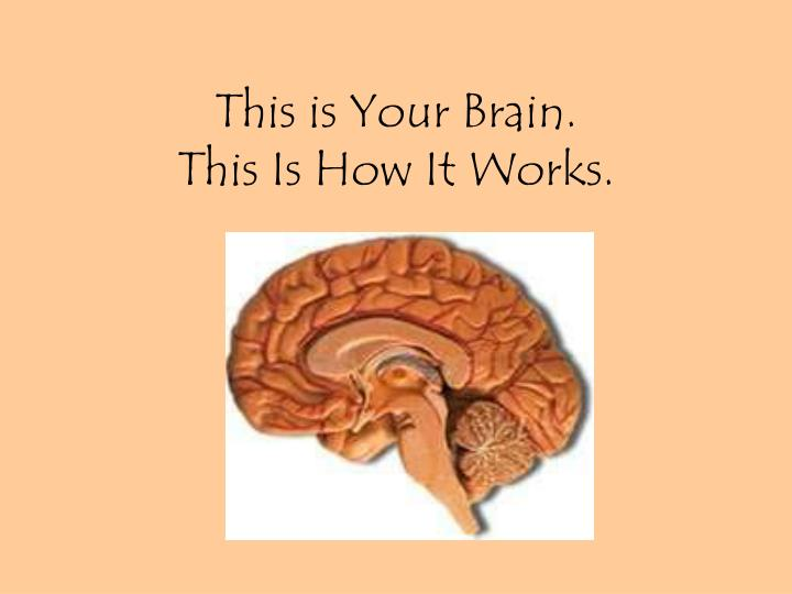 what the mind is and how it works Inside the mind the human brain how your brain works by craig freudenrich, phd & robynne boyd next page the human nervous system how cipa works.